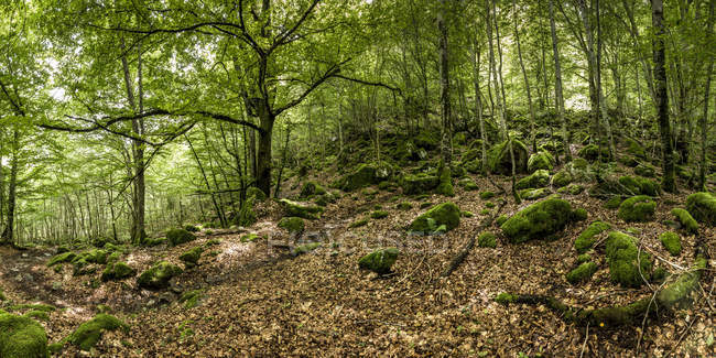 France, Pyrenees, Northern Catalonia, Valle de Orlu, forest — Stock Photo