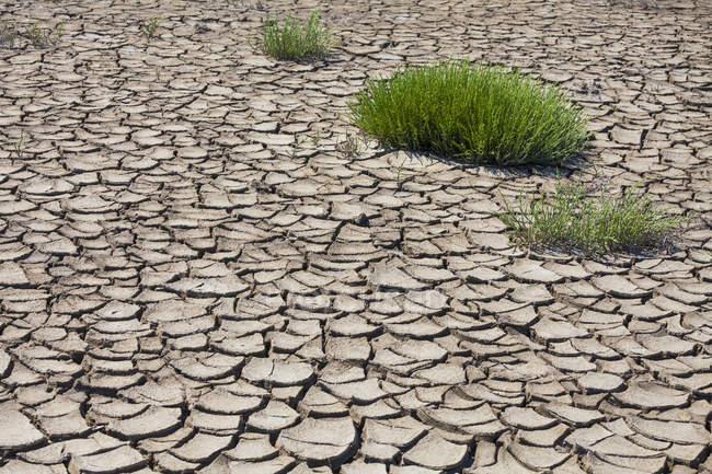 Франция, Прованс, Камарг, растения на эрозии почвы в болото. — стоковое фото
