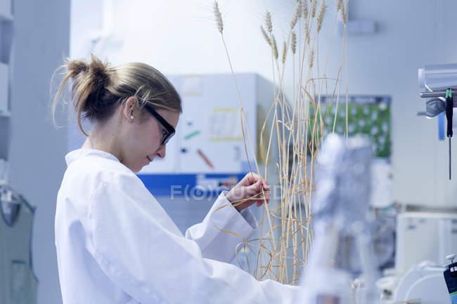 Молодой ученый работает в лаборатории с растениями — стоковое фото