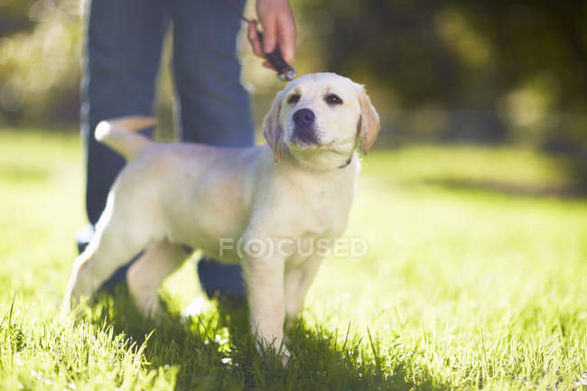 Woman with dog on a meadow — Stock Photo