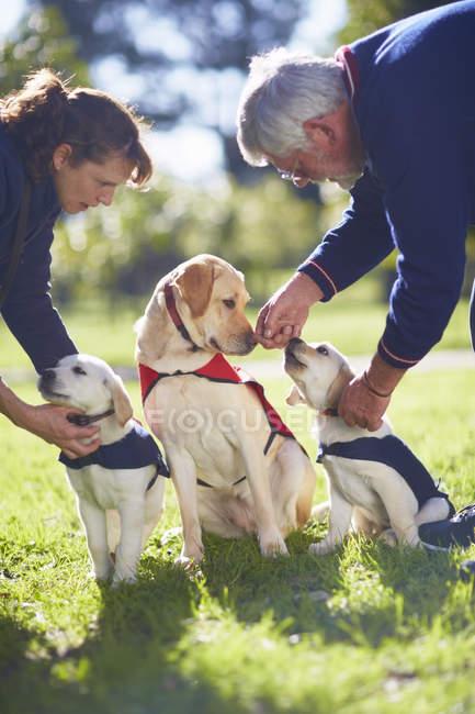 Drei Hunde im Hundetraining mit den Eigentümern zu führen — Stockfoto