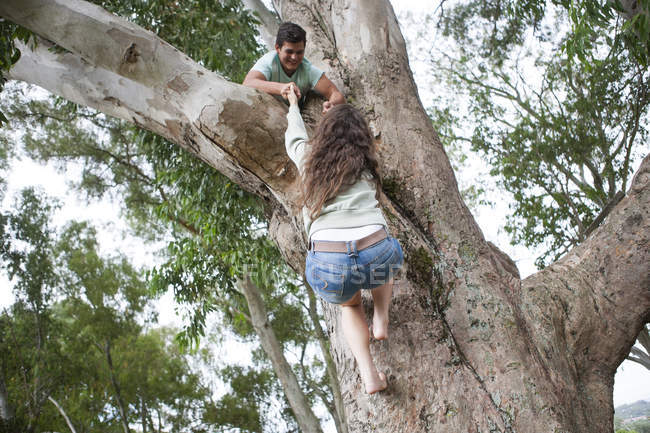 Teenager helfen Freundin auf einen Baum klettern — Stockfoto