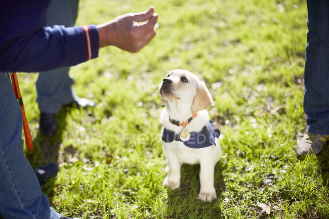 Puppy at dog training on meadow — Stock Photo