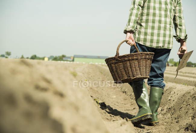 Fermier âgé portant un panier marchant sur le champ, vue partielle — Photo de stock