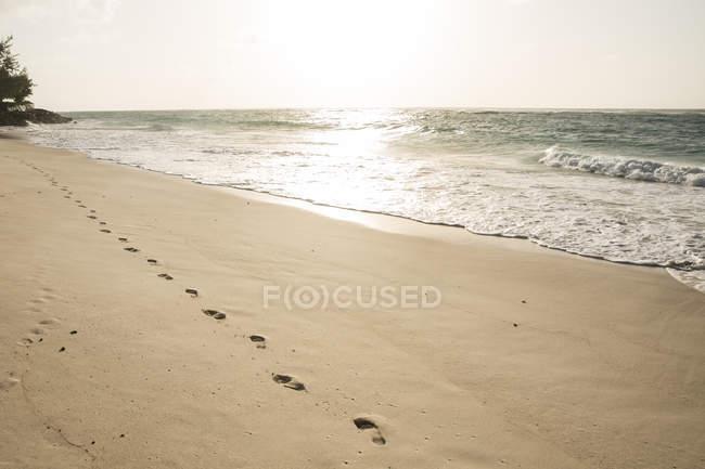 Карибский, Барбадос, Силвер-Сендс, следы на пляже — стоковое фото