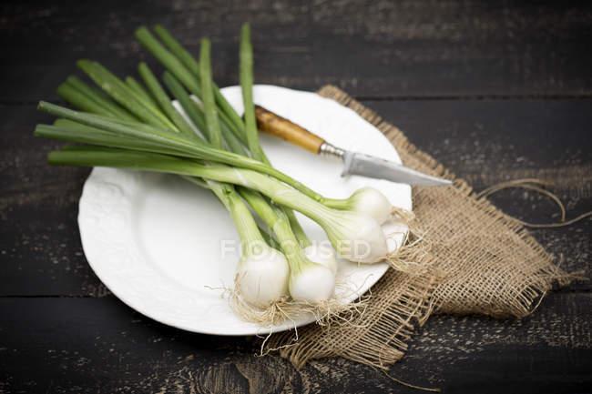 Весенний лук и нож на тарелке — стоковое фото