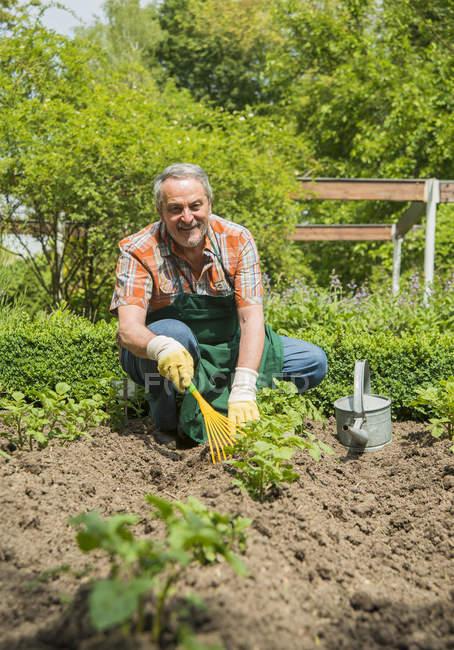 Старший садовник на работе с грабителем — стоковое фото