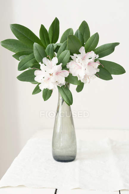 Rhododendron In Vase On Table Indoors Stock Photo 181287552