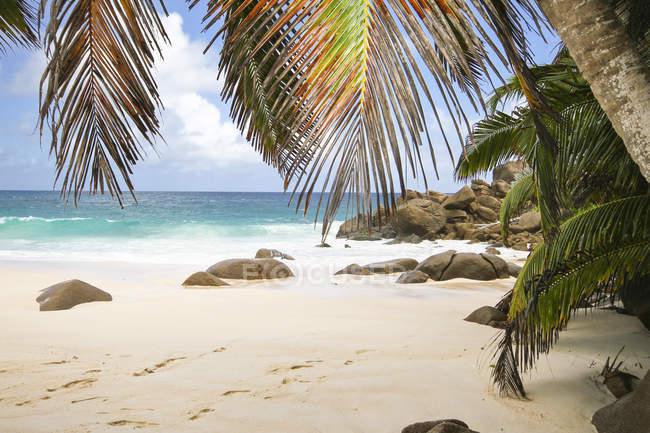 Seychelles, isola di Mahé, Anse Intendance, spiaggia con pietre e le palme sulla riva — Foto stock