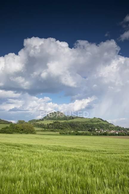 Allemagne, Bade-Wurtemberg, district de Constance, Hegau, Vue sur Hohentwiel, Champ d'orge — Photo de stock