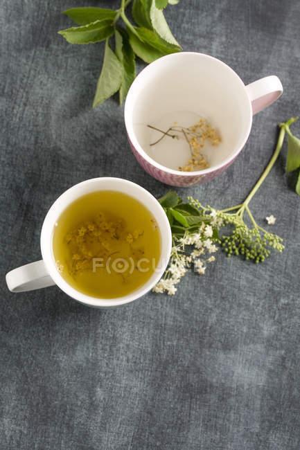 Elderberry tea in tea cup and elderflower — Stock Photo