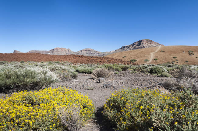 Spain, Canary Islands, Tenerife, Teide National Park during daytime — Stock Photo