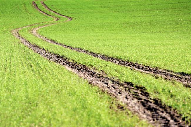 Германия, Озил, Клингберг, вид на трассу в окружении травы — стоковое фото