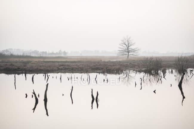 Германия, Северный Рейн-Вестфалия, Luebbecke, ландшафт и воды размышления на болотах Хиллер вечерние сумерки — стоковое фото