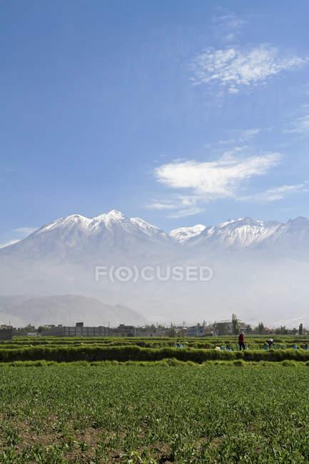 Sud America, Perù, Arequipa, campo verde e vista panoramica del vulcano Chachani su priorità bassa — Foto stock