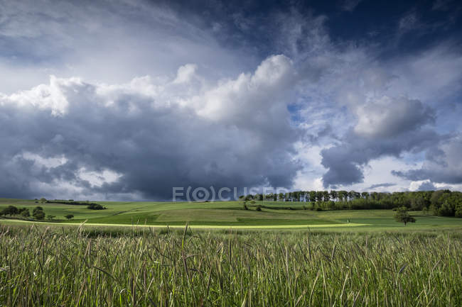 Germany, Baden-Wuerttemberg, Constance district, barkley field at Hegau by storm over grass — Stock Photo