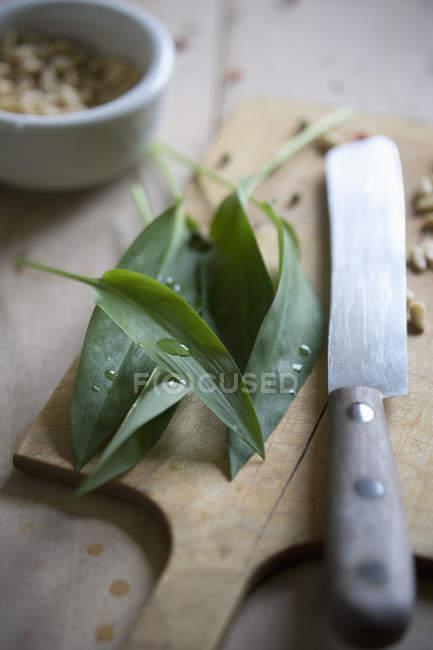 Черемша листя, кедрові горіхи і ножем на Розробні рада — стокове фото