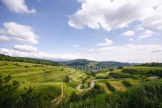 Германия, Баден-Вюртемберг, Кайзерштуль, виноградарство на террасовых полях — стоковое фото
