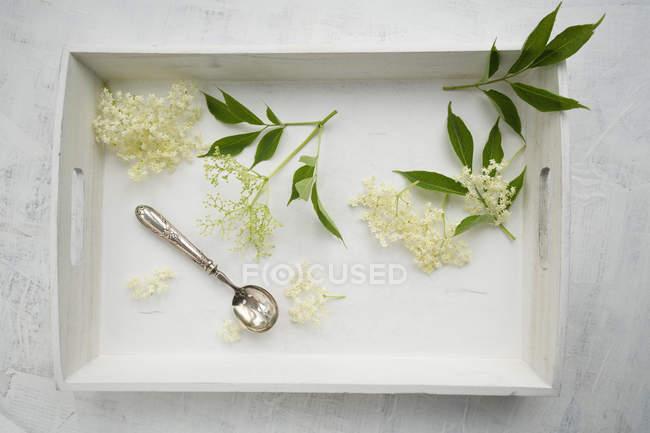 Fleurs de sureau et cuillère sur plateau blanc, vue surélevée — Photo de stock