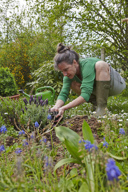 Mature woman gardening in the yard — Stock Photo