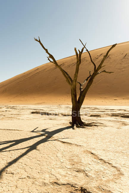 Africa, Namibia, Sossusvlei, Sand dune, Dead tree over sand during daytime — Stock Photo