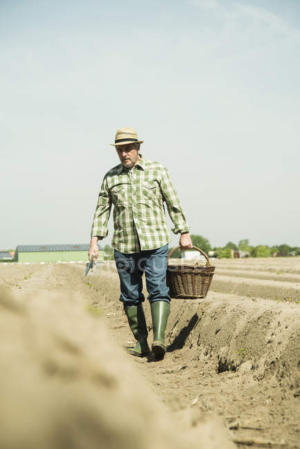 Caucasian senior farmer walking with basket at field — Stock Photo