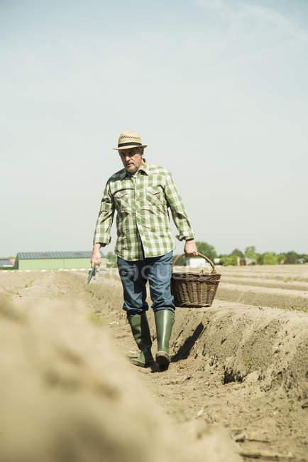 Caucasian senior farmer walking with basket at field — Stock Photo