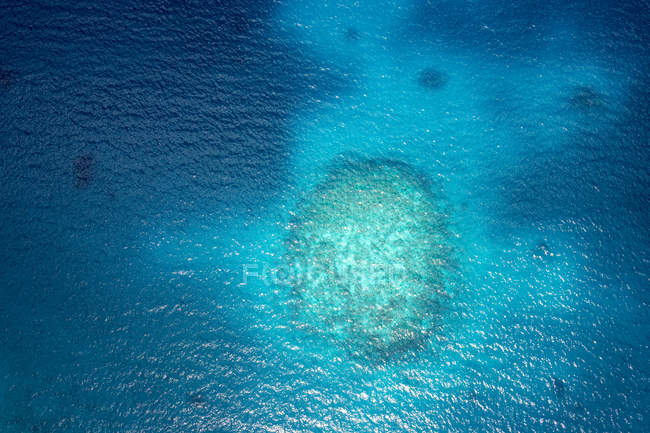 Oceanía, Palaos, Océano Pacífico, Arrecife de coral - foto de stock