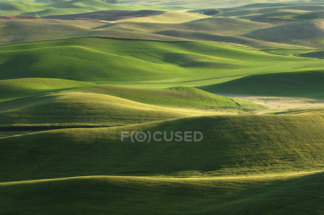 USA, Washington State, aerial view to fields and green hills of Palouse — Stock Photo