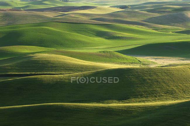 США, штат Вашингтон, аэрофотоснимок поля и зеленые холмы Палус — стоковое фото