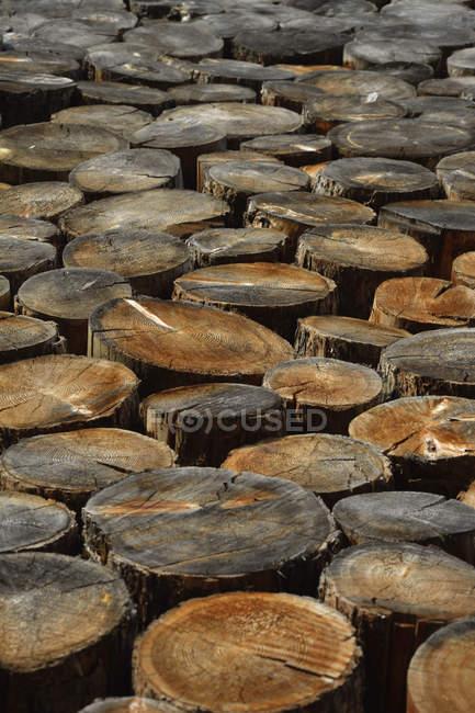 Германия, Бавария, обрезанные стволы деревьев — стоковое фото