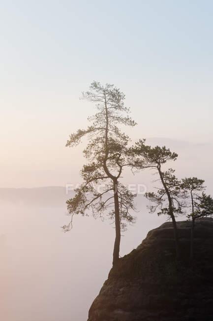 Alberi di Germania, Sassonia, che crescono sul pendio alle montagne di arenaria dell'Elba — Foto stock
