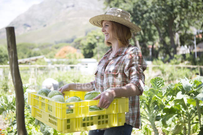 Female gardener with plastic box of harvested cabbages — Stock Photo