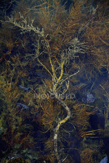 Stream with aquatic plants on dark blue background — Stock Photo