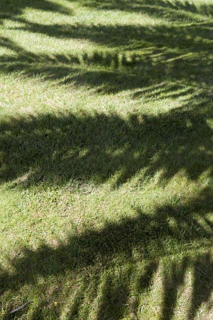 Португалия, Синтра, тень пальмы — стоковое фото