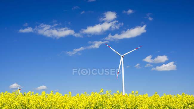 Germania, Baden-Wuerttemberg, Tomerdingen, ruota del vento sul campo di stupro di giorno soleggiato — Foto stock