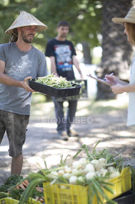 Gardener showing box of green beans — Stock Photo