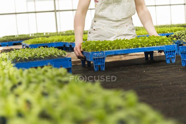 Jóvenes jardineras trabajando en viveros de plantas - foto de stock