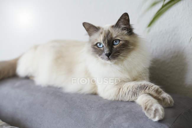 Кот лежит на диване и смотрит боком — стоковое фото