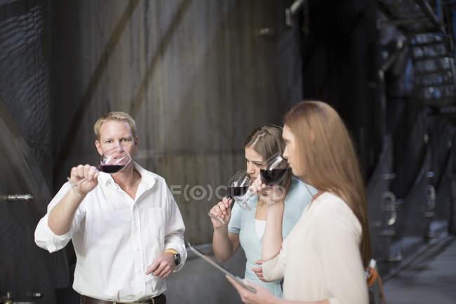 Три человека, дегустация вин в погребе — стоковое фото