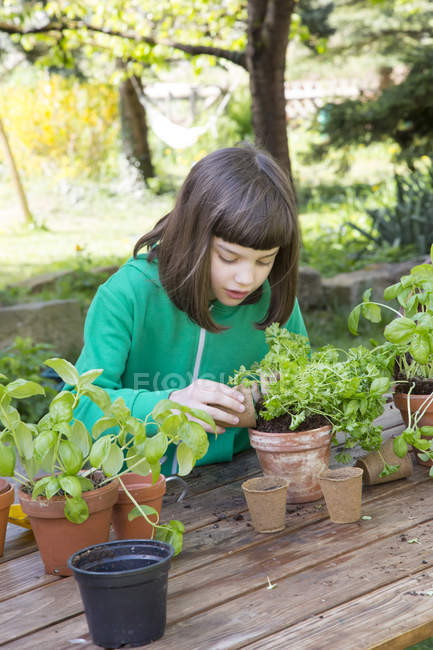 Little girl potting parsley on wooden table in the garden — Stock Photo