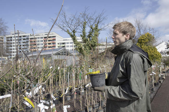 Молодий садівник на роботі, розміщення рослин горщиків — стокове фото