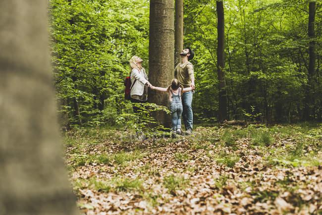 Familie im Wald steht um Baumstamm herum und schaut auf — Stockfoto