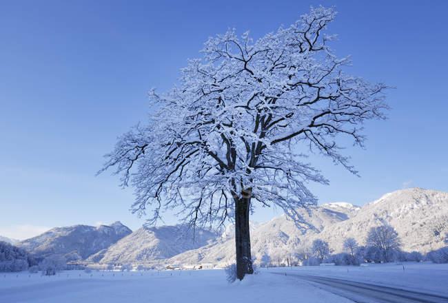 Germany, Bavaria, Upper Bavaria, Chiemgau, Schleching, snow-covered tree on rural road — Stock Photo