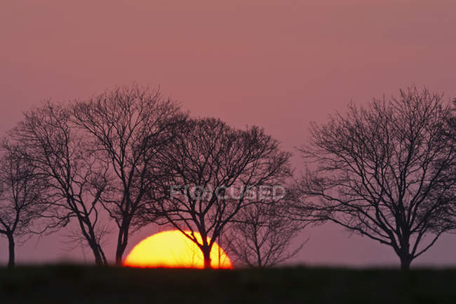 Scenic view of evening sun and trees at sunset Bavaria, Germany, — Photo de stock