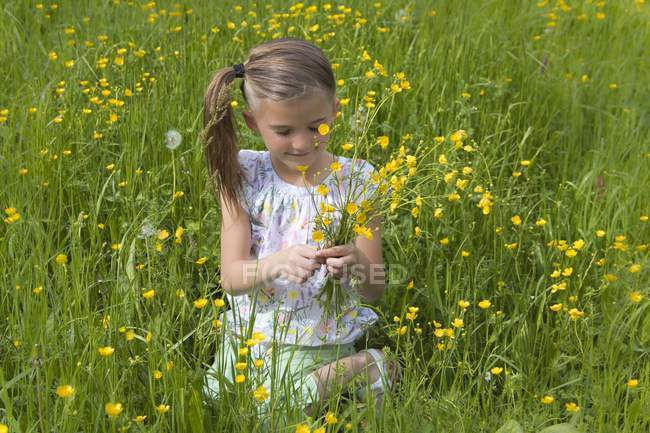 Little girl picking buttercups on a meadow — Stock Photo