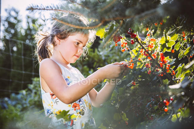 Girl inspecting currant bushes at garden — Stock Photo