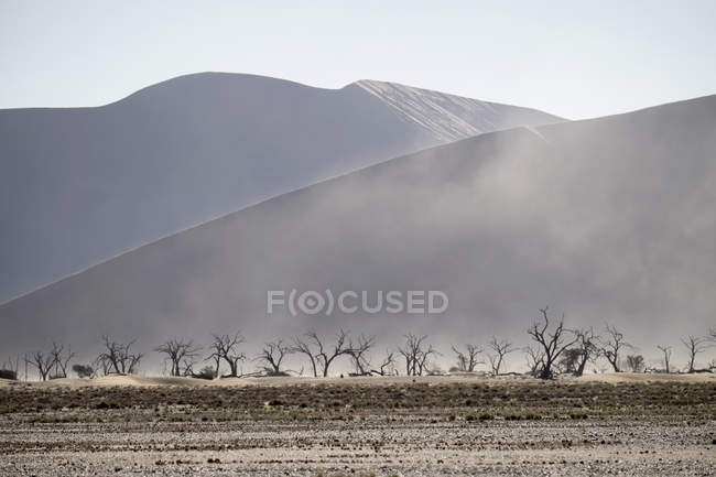 Africa, Namibia,  Sossusvlei, Sandstorm, Dead trees and sand dunes — Stock Photo
