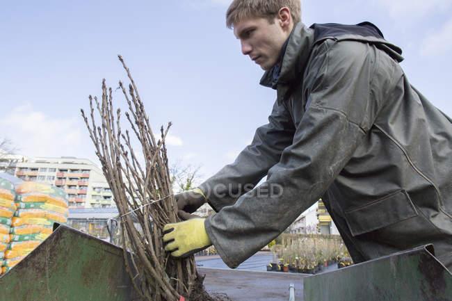 Jovem jardineiro no trabalho, carregando o arbusto — Fotografia de Stock