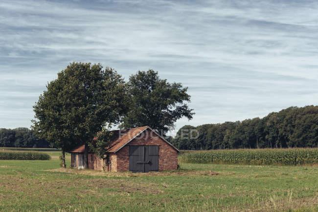 Germany, North Rhine-Westphalia, Farmhouse in western Muensterland — Stock Photo